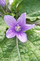 7-purple-flower