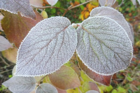 9-frosty-leaves