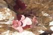 7-succulent