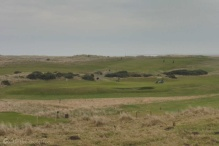 11-goswick-links-golf-course