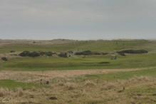 11-goswick-links-golf-course