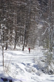 14-cross-country-skier