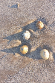 15-limpet-shells-casting-a-shadow