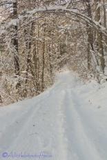 17-snowy-path