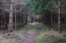 17-woodland-path