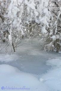3-frozen-pool