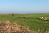 6-warkworth-golf-course