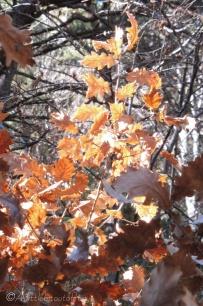 16-leaves