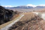 25-vineyards