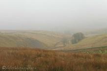 12 Misty View