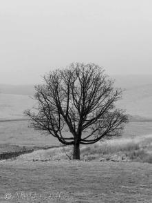 14 Tree