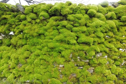 15 Mossy wall