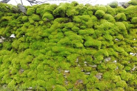 15 Mossy wall