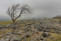 27 Limestone pavement