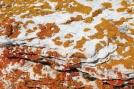 15 Lichen
