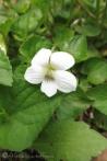 21 White flower