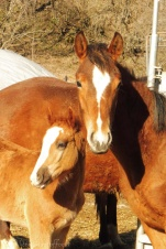 8 Foal with mother