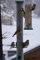 3 Bird feeder