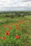 1 Poppies