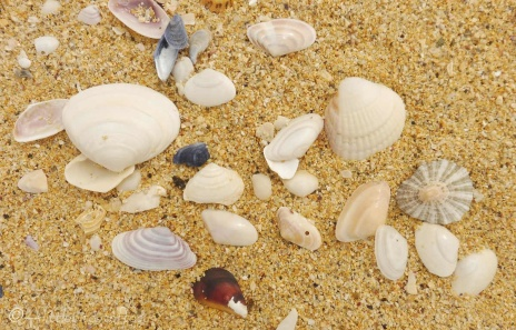 1 Shells