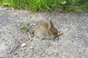 11 Lost bunny