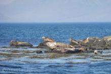 11 Seals