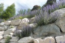12 Rocky wild garden (of Viper's Bugloss)