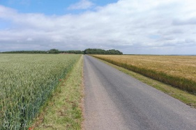12 Wheat and Barley fields