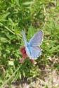 25 Blue butterfly