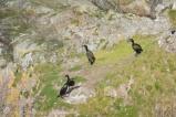 4 Cormorants