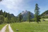 7 Alpine meadow