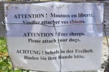 17 Free Sheeps