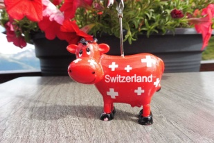 21 Swiss cow