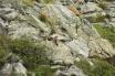 3 Marmot