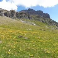 37 Meadow flowers