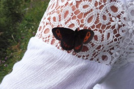 4 Friendly Scotch Argus