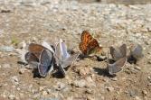 42 Butterflies
