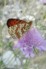 49 One last butterfly