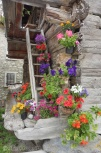 7 Summer flowers