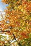 13 Autumn colours