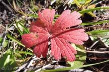 14 Autumn leaf