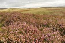 5 Moorland view