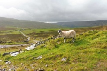 5 Sheep