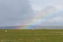 7 Rainbow