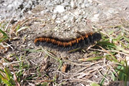 8 Caterpillar