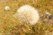 9 Unknown flower