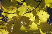 12 Autumn Leaves