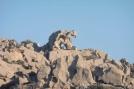 14 Bear Rock