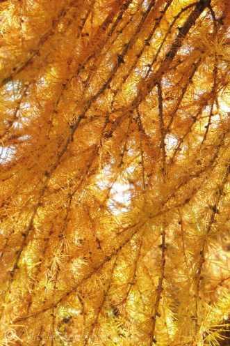 16 Autumn colours