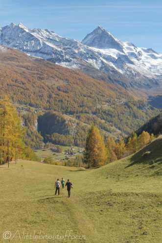 17 Alpine meadow